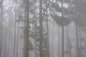 Fog pines barcode pattern