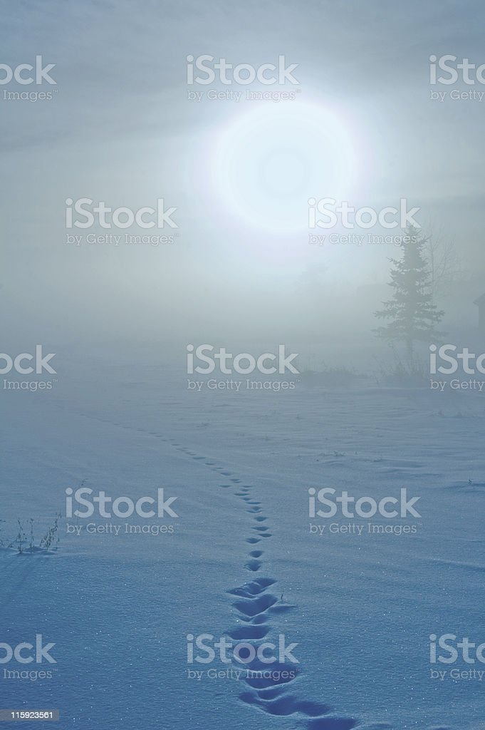 Fog, Setting Sun,and Animal Tracks in the Snow royalty-free stock photo