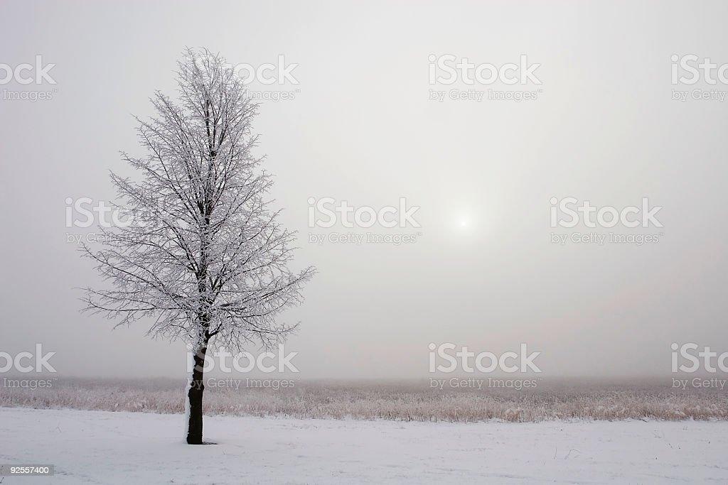 Fog, Snow and Tree stock photo