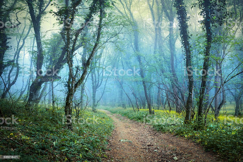 Fog. Spring forest in the Crimea stock photo