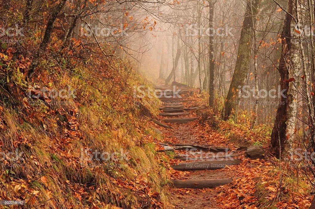 Foggy Appalachian Trail stock photo