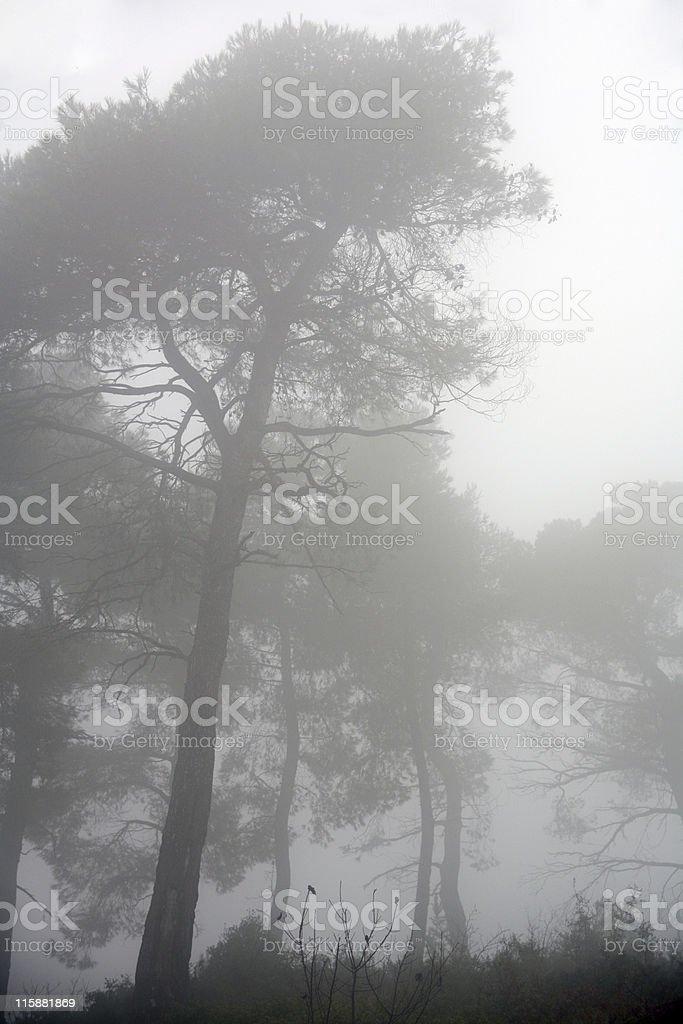 Foggy atmosphere stock photo