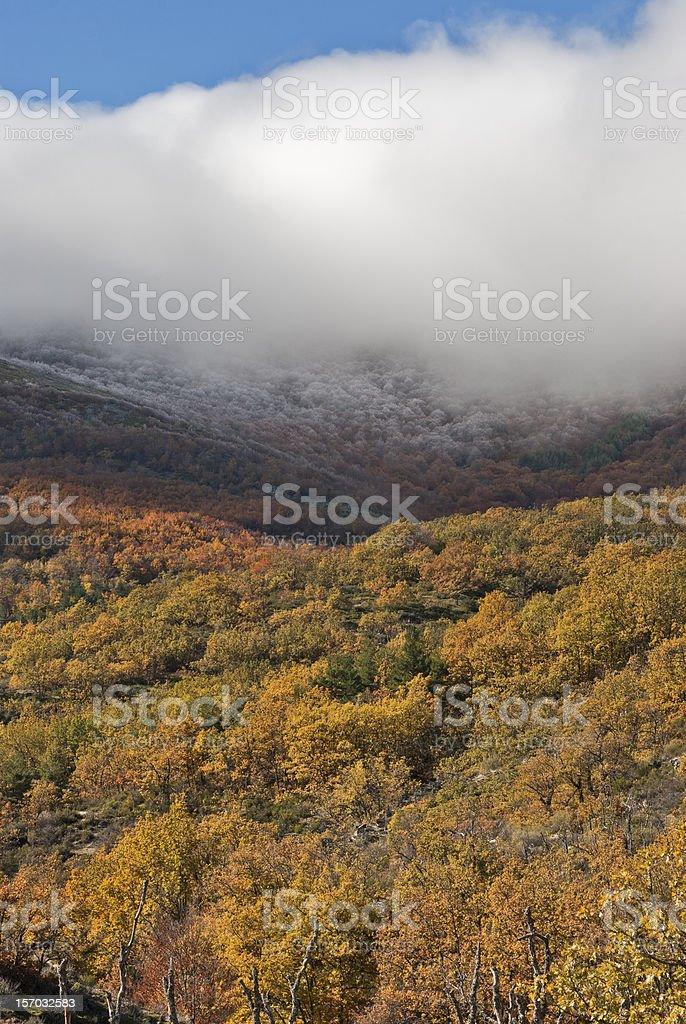 Bosque de niebla otoño - foto de stock