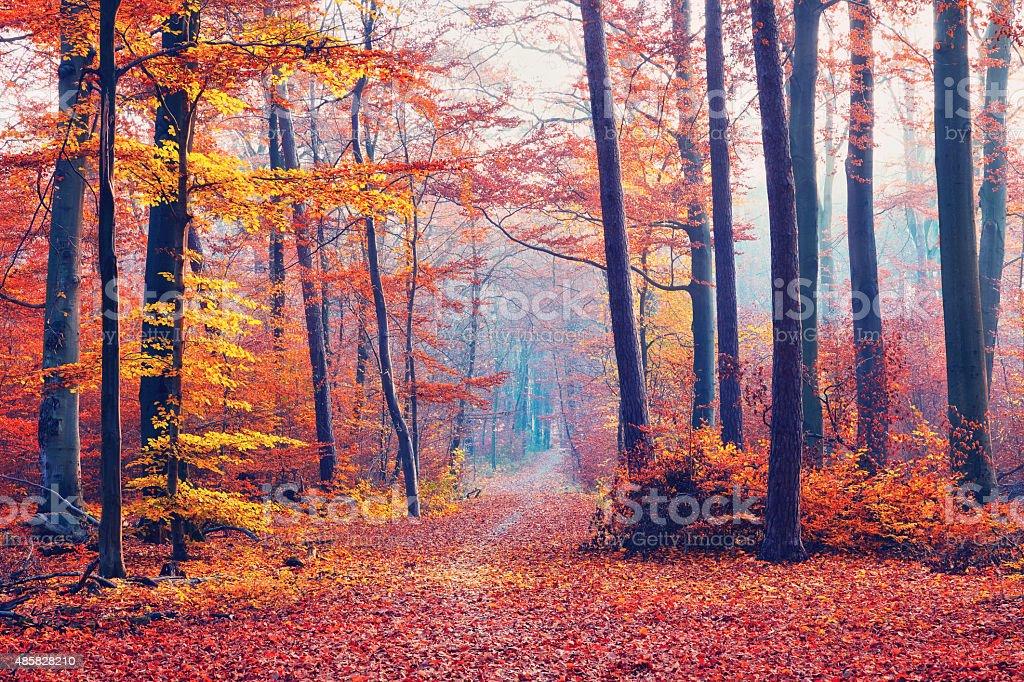 Foggy autumn forest stock photo