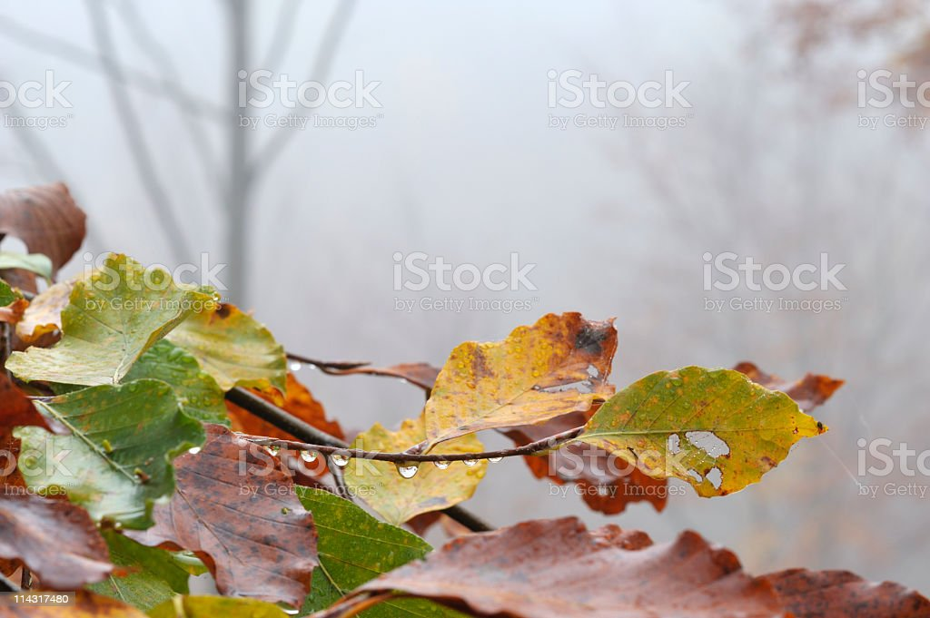 Foggy Autumn Leaves Background royalty-free stock photo