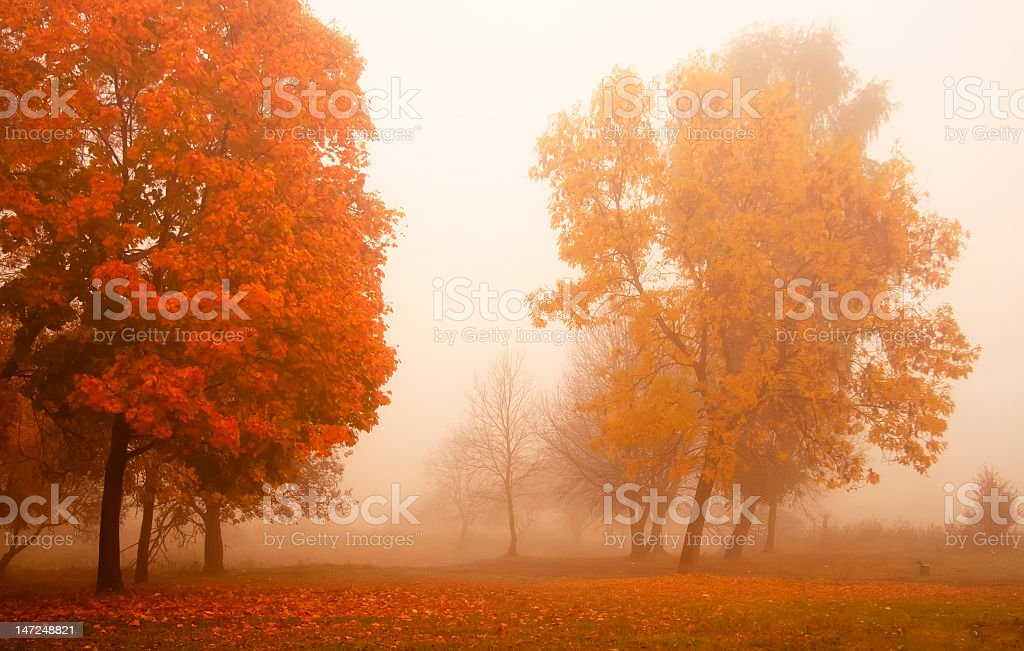 Foggy autumn morning in the field stock photo