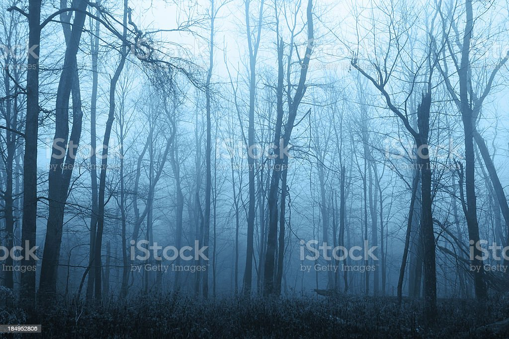 Foggy Blue Woods stock photo