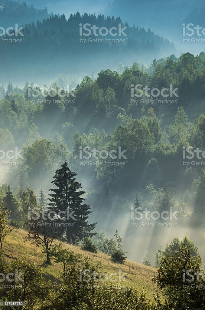 Foggy dawn stock photo