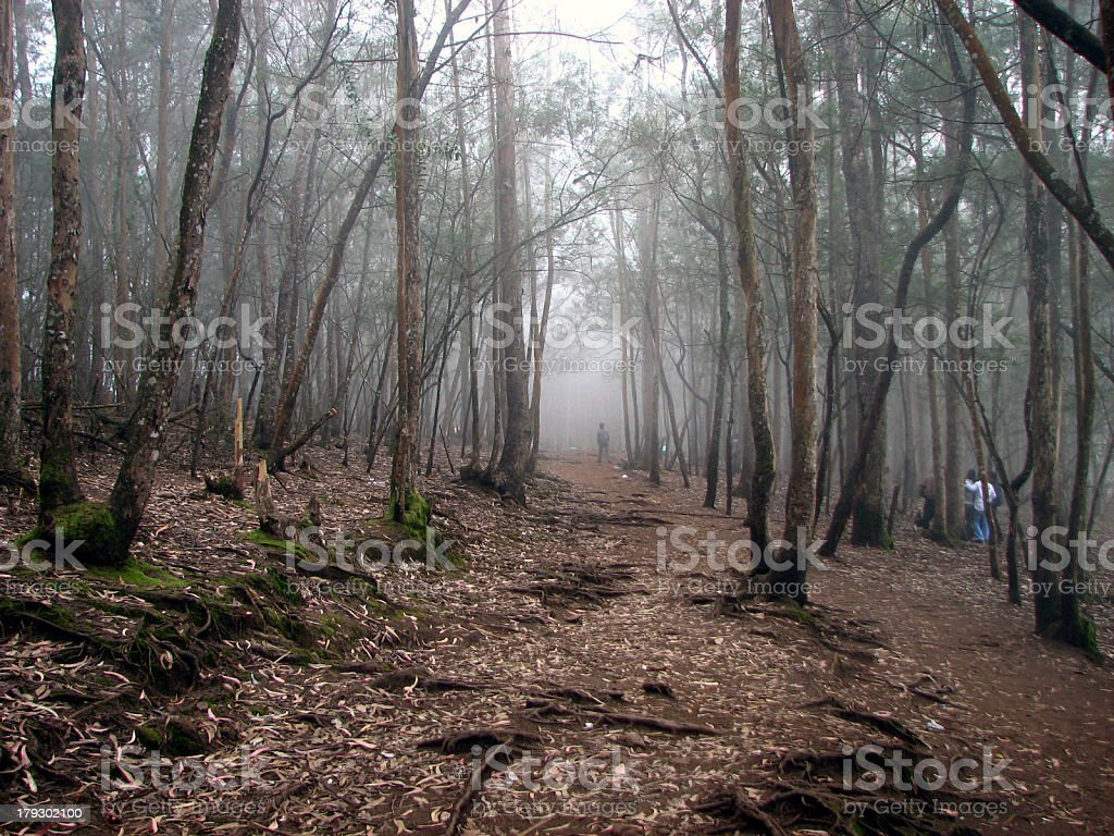 Foggy Day in Forest royalty-free stock photo