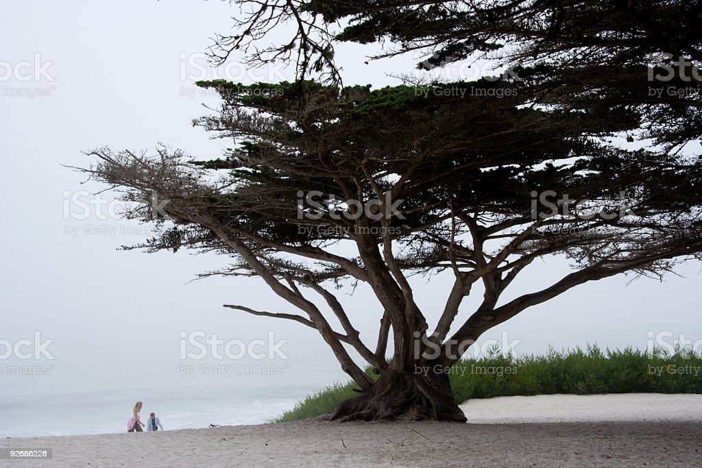 Foggy Day Walk in Carmel royalty-free stock photo