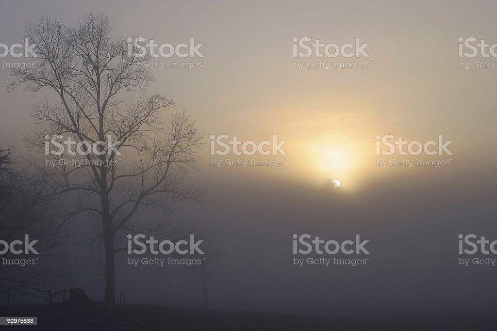 Foggy Daybreak royalty-free stock photo