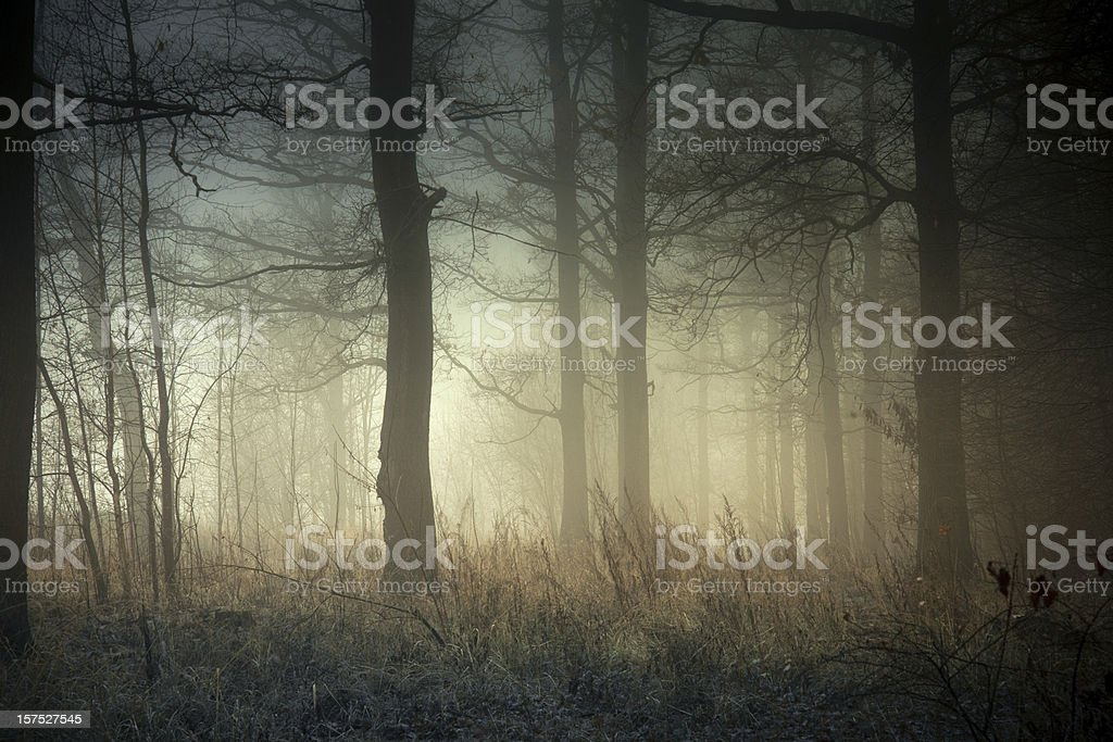 Foggy forest at sunrise stock photo