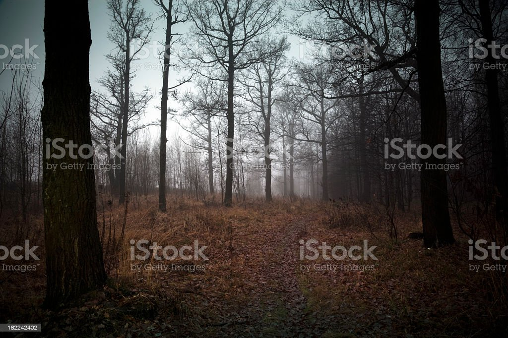 Foggy forest in autumn royalty-free stock photo