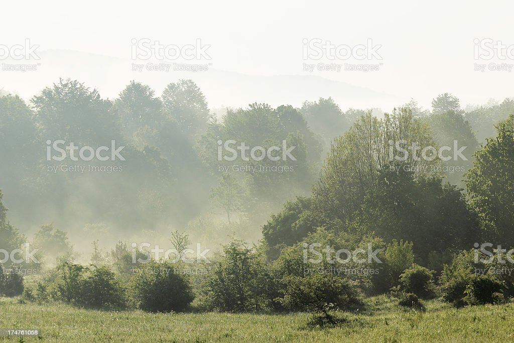 foggy forest morning spring dawn sunrise in Plitvice Croatia royalty-free stock photo