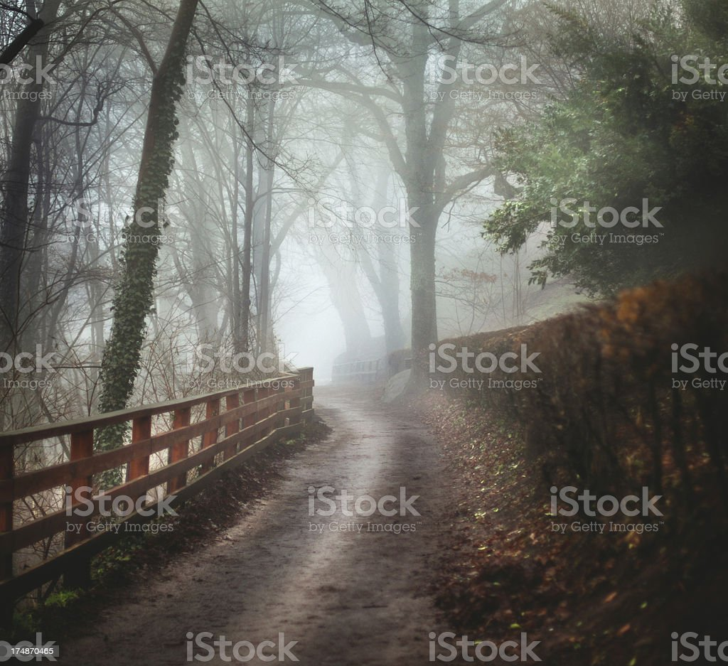 Foggy forest path on the early morning. royalty-free stock photo