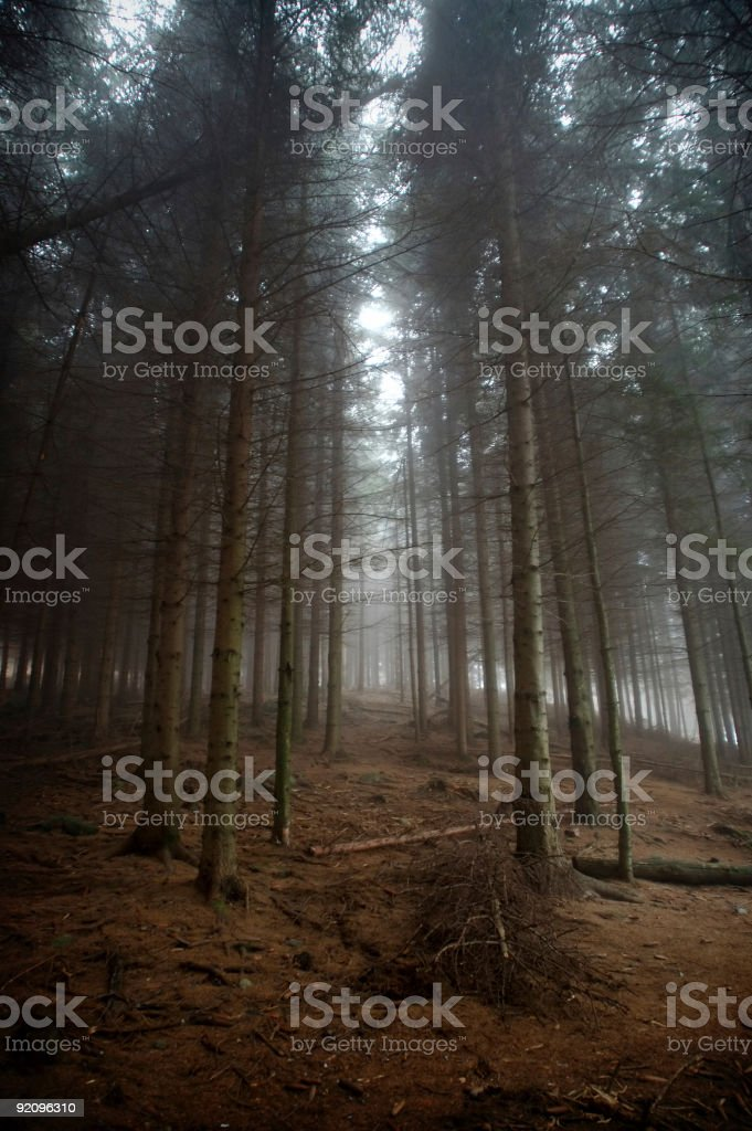 Foggy forest royalty-free stock photo