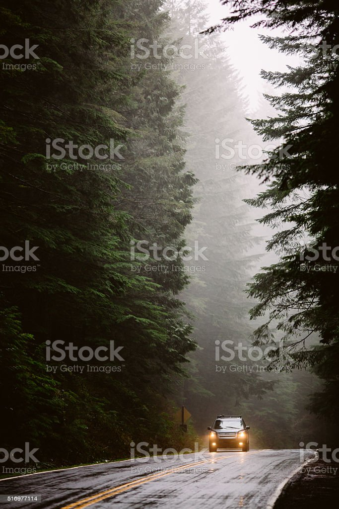 Foggy Forest Road stock photo