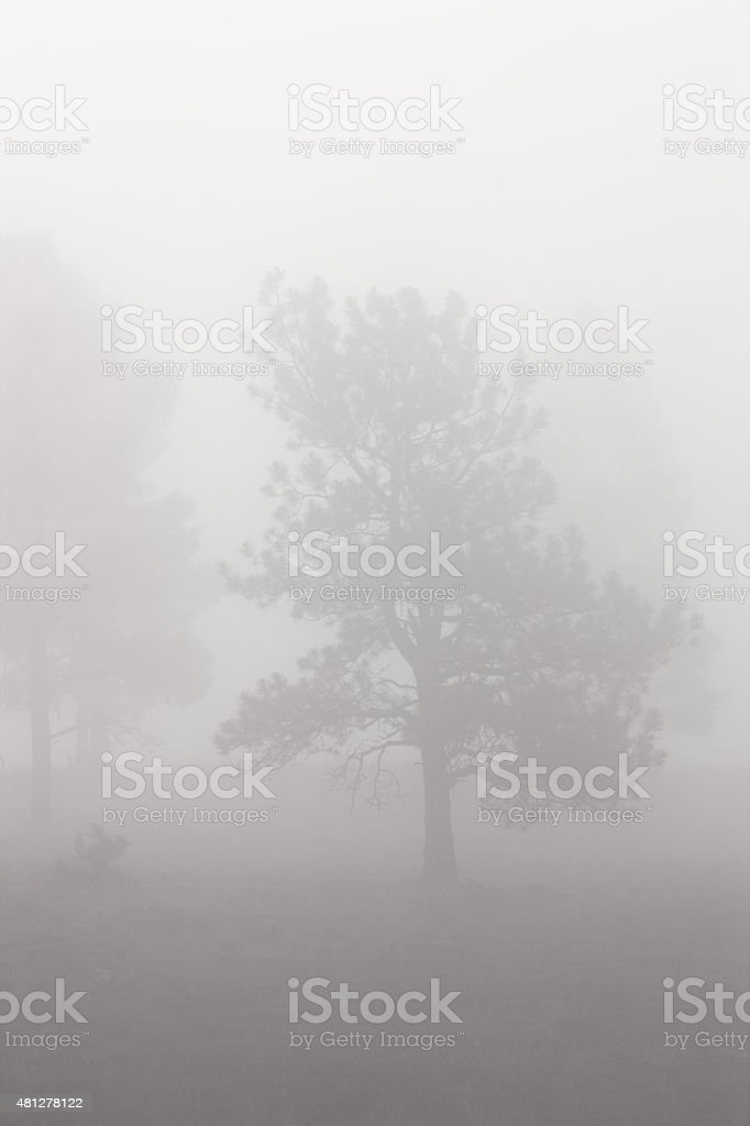 Foggy Forest Sunrise Storm stock photo