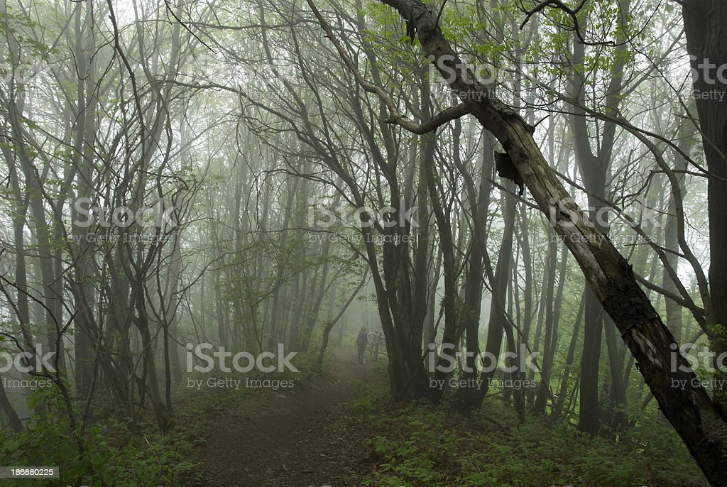 Foggy forest walking path stock photo