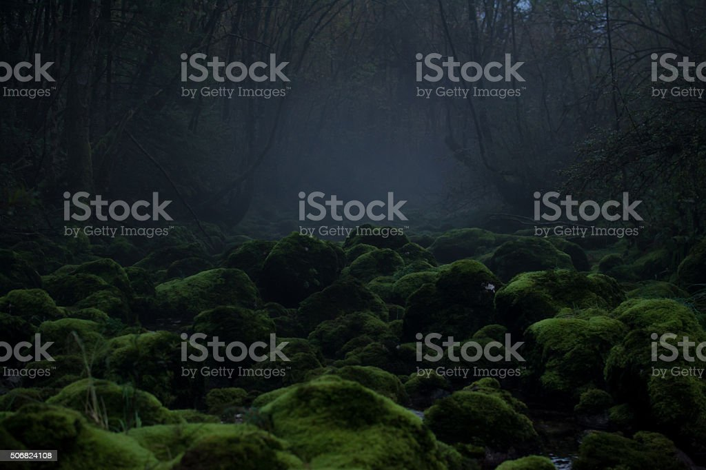 Foggy Forest With Moss Stream stock photo
