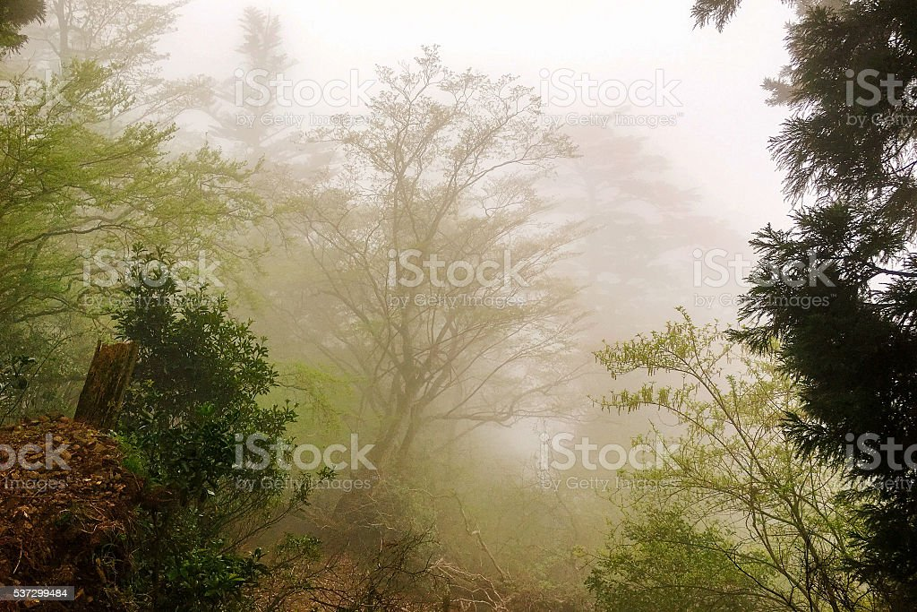 Foggy forest with rain drops sound stock photo