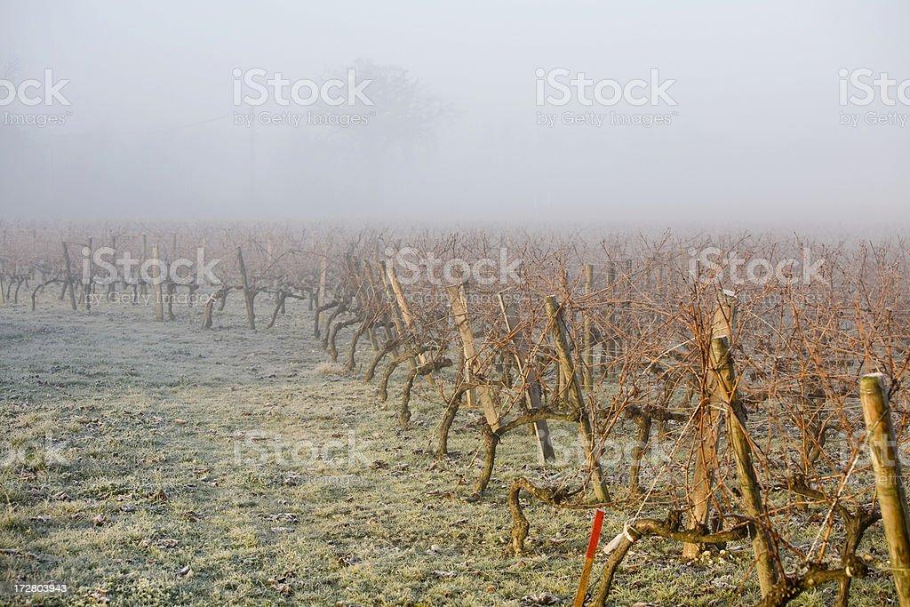 Foggy French vineyard at sunrise, Bordeaux, France royalty-free stock photo