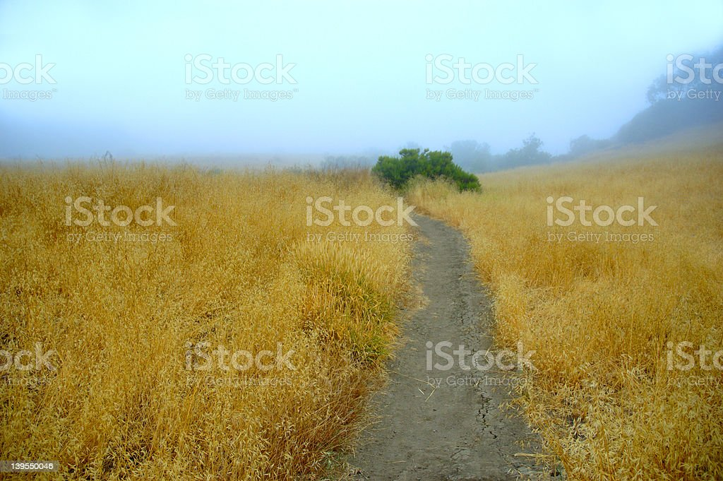 Foggy Golden Field royalty-free stock photo