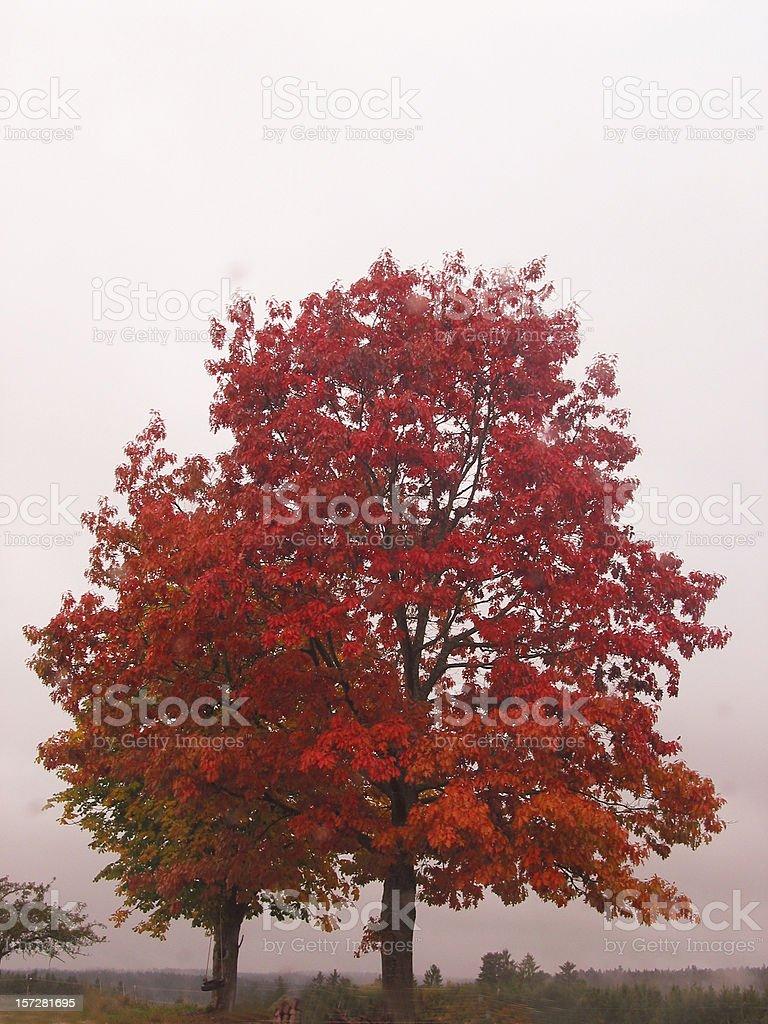 Foggy grey day! royalty-free stock photo