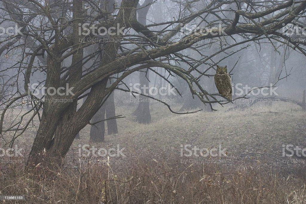 Hanté de forêt mystérieuse avec brouillard Chouette photo libre de droits
