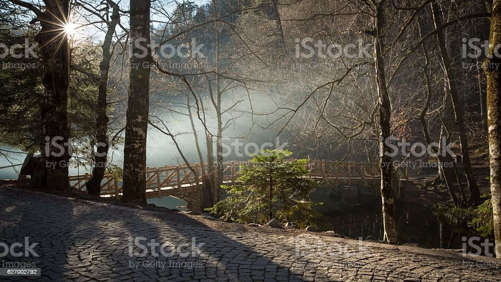 foggy in the forest by the Lake bridge stock photo