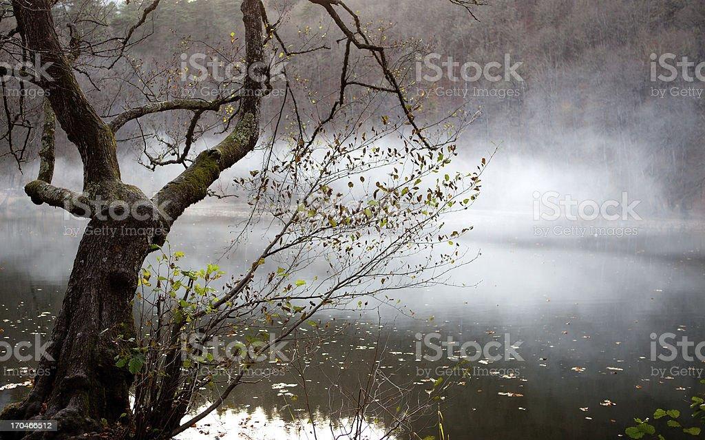 Foggy Lake royalty-free stock photo