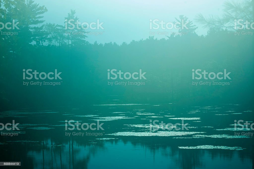 Foggy Lake with Lilies and Trees stock photo