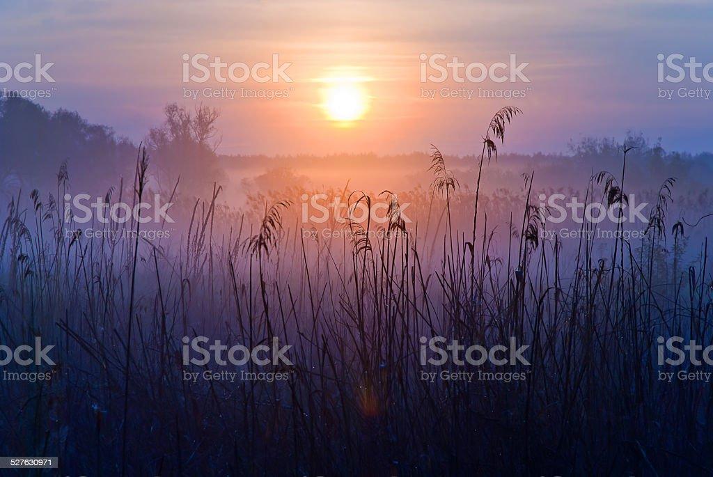Paysage de Foggy Bottom. Tôt le matin sur une prairie. photo libre de droits