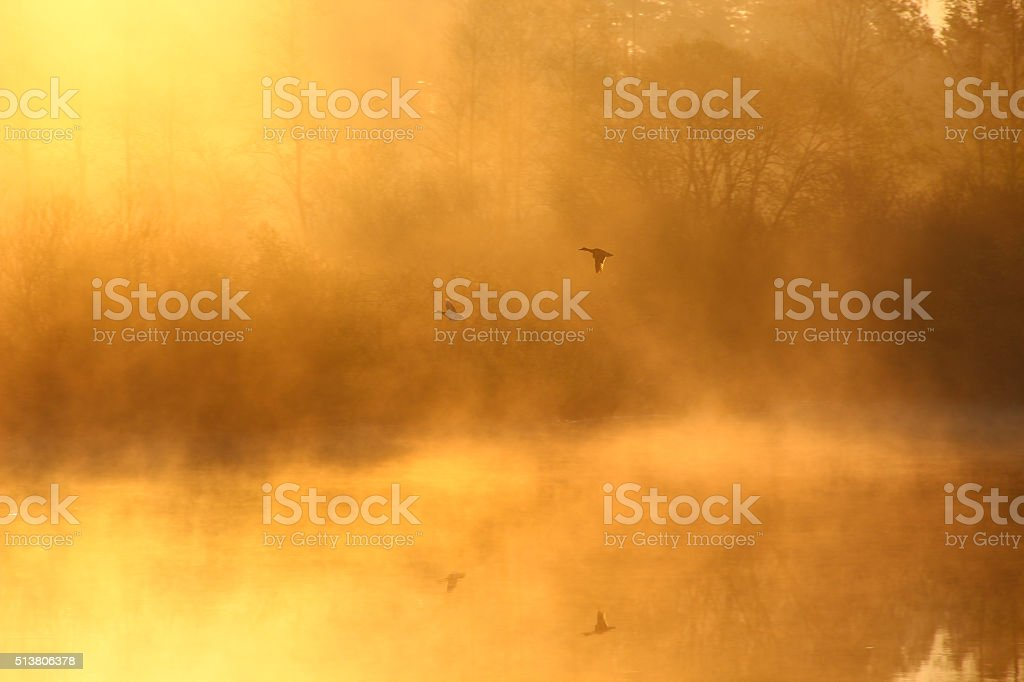 Foggy landscape: early morning on the river stock photo