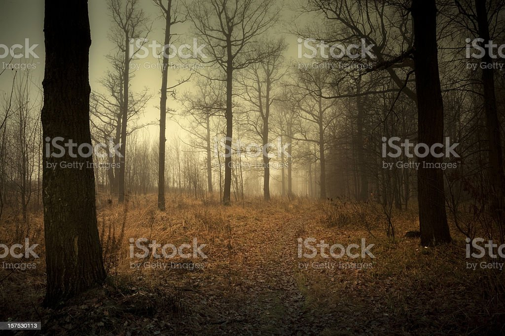 Foggy landscape in autumn royalty-free stock photo