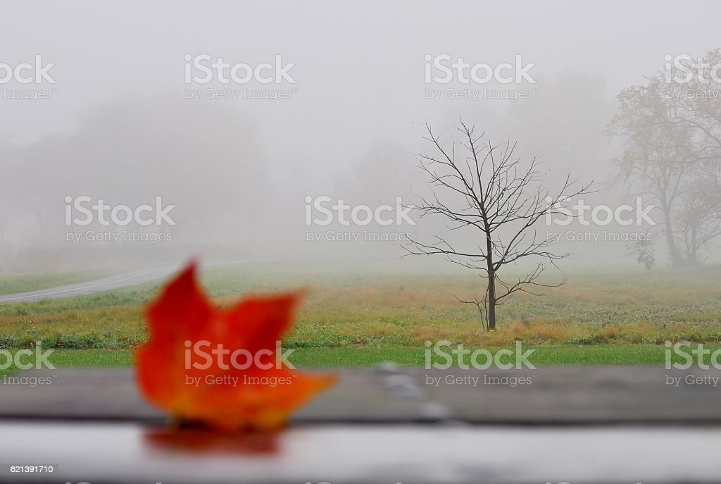 Foggy landscape with autumn leaf in a foreground. stock photo