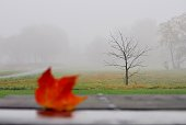 Foggy landscape with autumn leaf in a foreground.