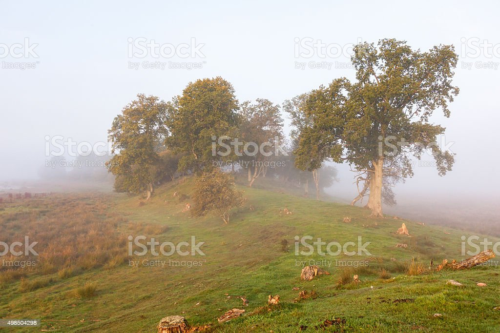 Foggy landscape with trees on a ridge stock photo
