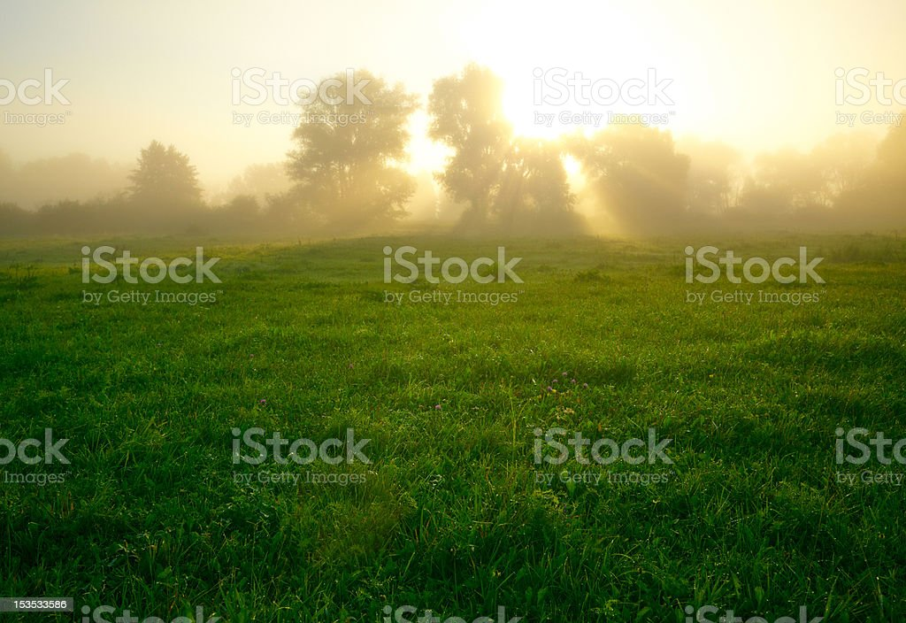 Foggy medow at susrise royalty-free stock photo