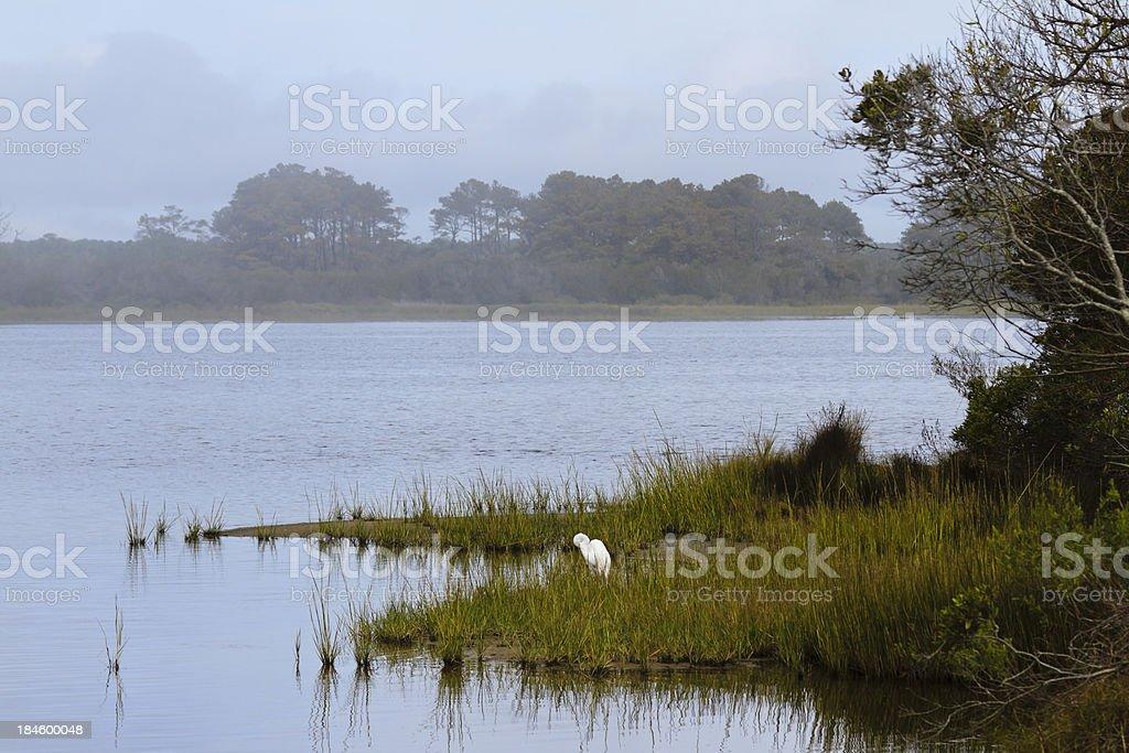 Foggy Morning at Chincoteague National Wildlife Refuge stock photo