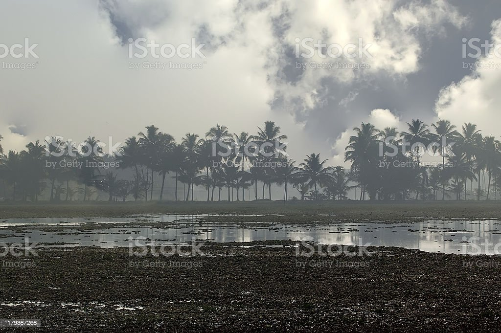 Foggy morning at the backwaters or swamps in jungles royalty-free stock photo