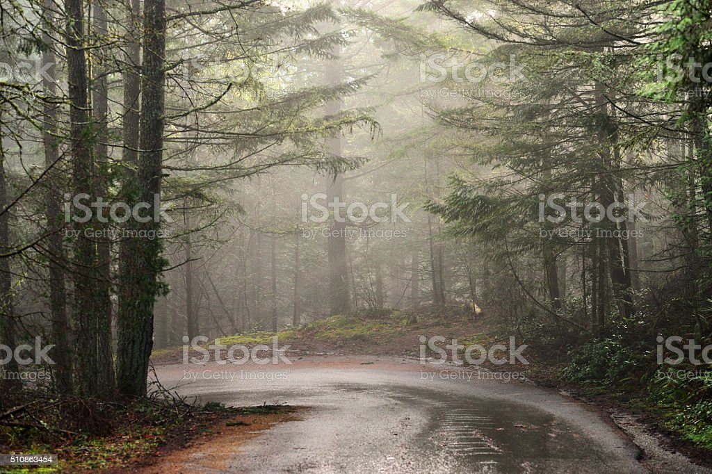 Foggy Morning Forest Road stock photo
