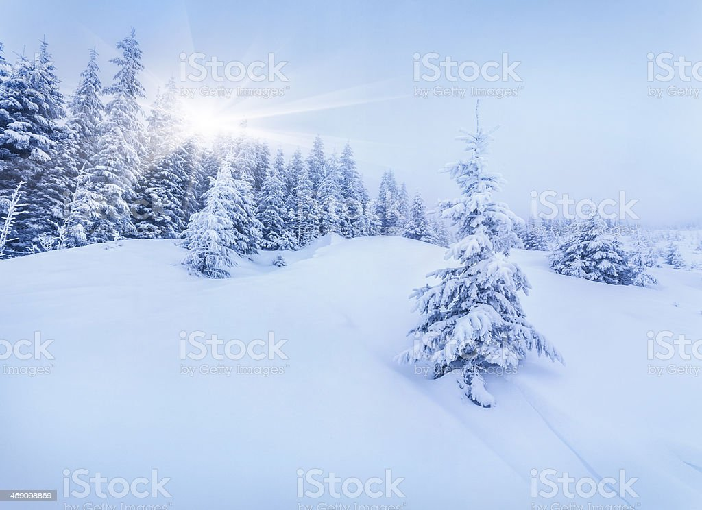 Foggy morning in a winter forest stock photo
