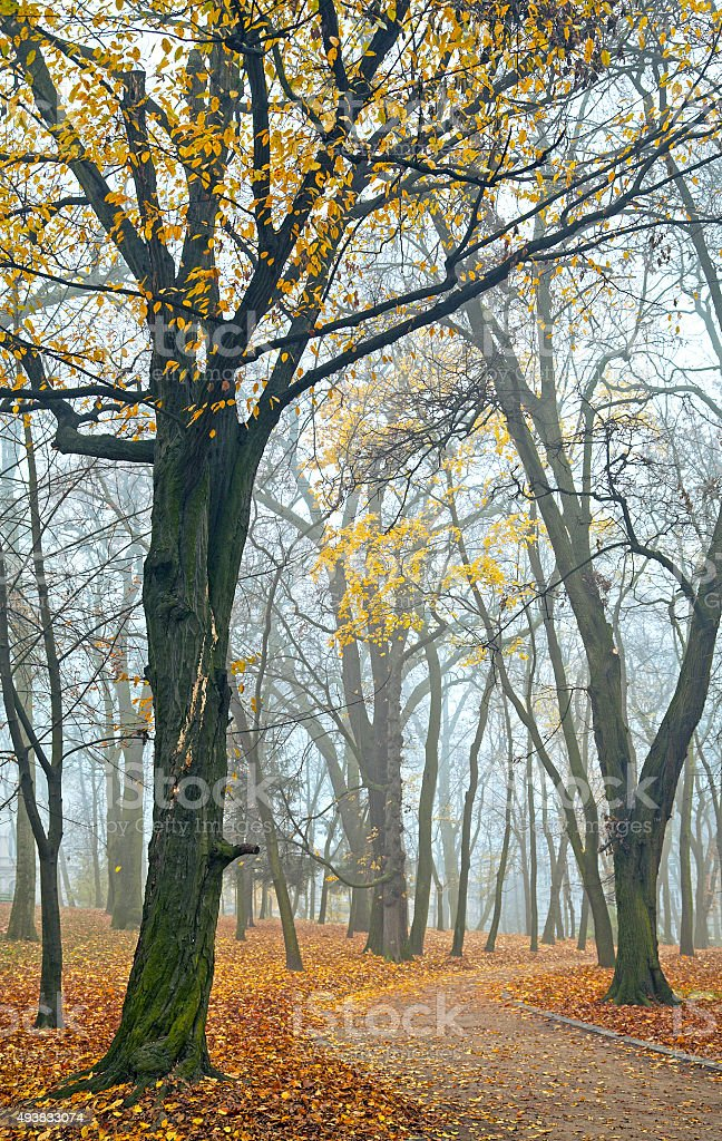 Foggy morning in autumn park stock photo