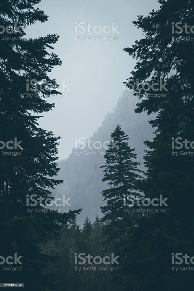 Foggy morning in mountains. stock photo