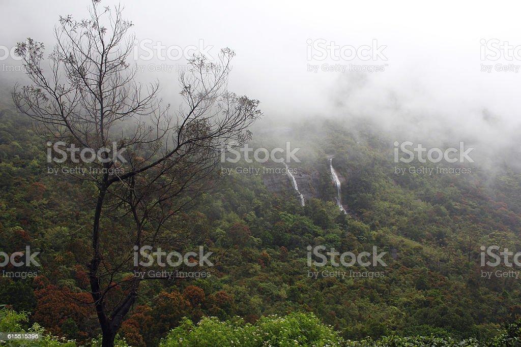 Foggy morning in mountains, Sri Lanka stock photo