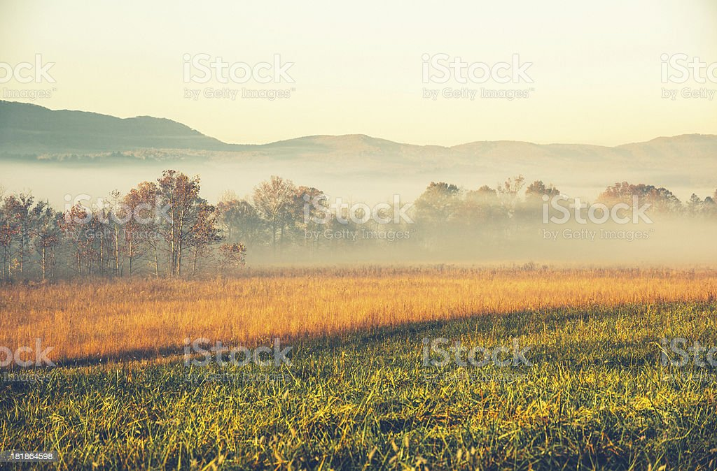 Foggy Morning in the Meadow royalty-free stock photo