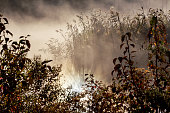Foggy morning on river. Autumn landscape with reeds in foreground