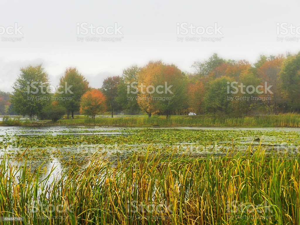 Foggy Morning on the Lake stock photo