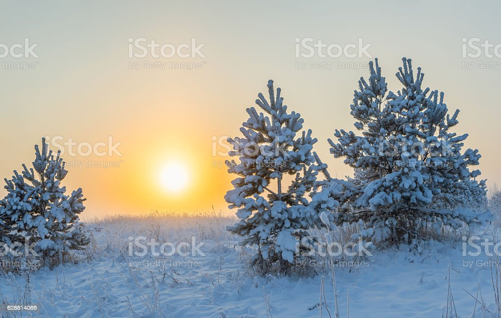 Foggy morning sun rises over the winter meadow. stock photo